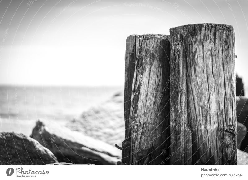 Wooden piles by the sea Vacation & Travel Tourism Far-off places Freedom Summer vacation Ocean Environment Nature Landscape Air Sky Beautiful weather