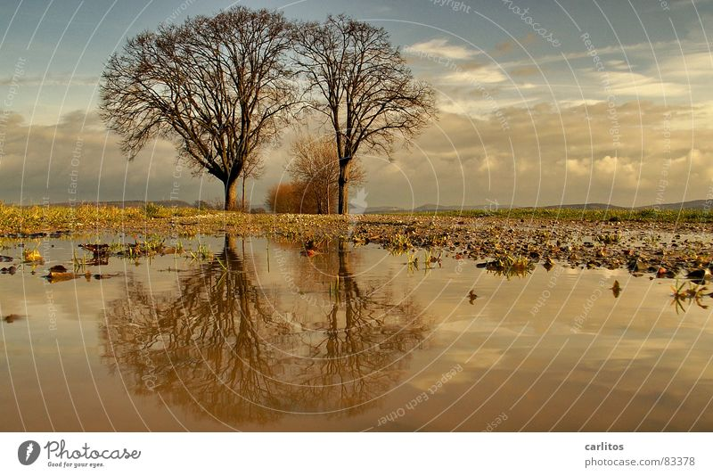 Tintin and Struppi II Horizon Tree 2 Footpath Puddle Reflection Clouds Dramatic Wind Passion Middle Symmetry White balance Tree trunk Tree structure Portal