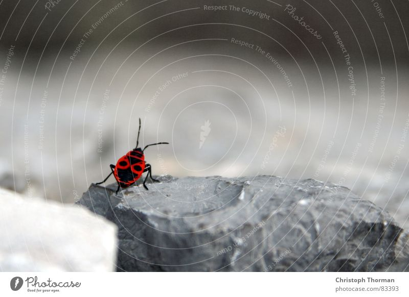 Nature Red Loneliness Black Animal Relaxation Wall (building) Environment Gray Wall (barrier) Small Stone Break Posture Climbing Insect