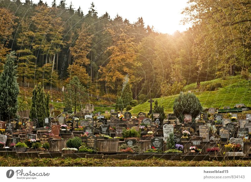 Quiet. Luxury Night life Funeral service Grandparents Senior citizen Grandfather Grandmother Life Calm Cemetery Forest Last Arrival Heaven Death Tombstone