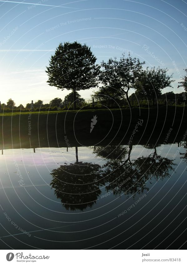 mirror image Vapor trail Pond Mirror Mirror image Tree Row of trees Black Body of water Meadow Green Lighting Fence Apple tree Summer Autumn Reflection Water