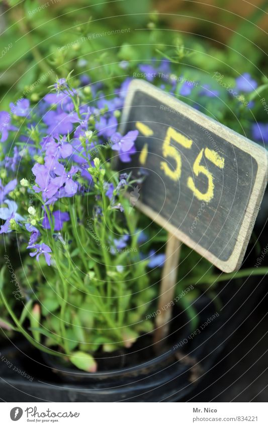 schnapspflanze Environment Plant Flower Garden Blossoming Green Spring fever Cheap Price tag Market garden Digits and numbers Growth Fragrance Larkspur Violet