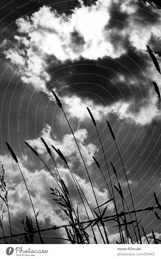 Sky Green Clouds Meadow Grass Pasture Blade of grass Plant Barbed wire Darken
