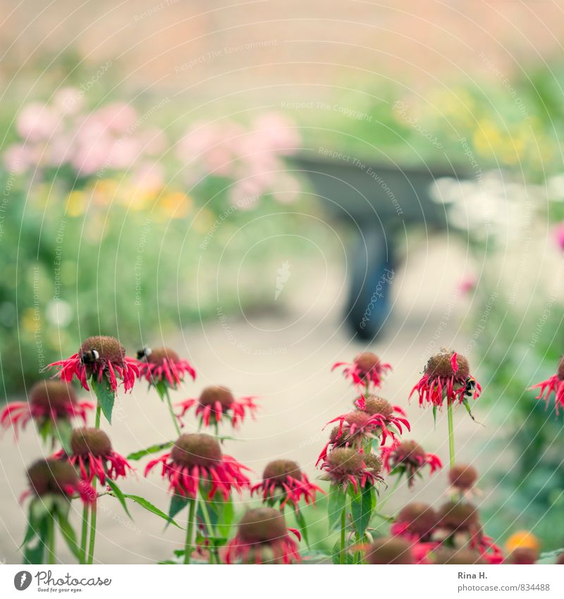 gardening Summer Beautiful weather Flower Garden Blossoming Faded To dry up Contentment Joie de vivre (Vitality) Wheelbarrow Gardening Country life Colour photo