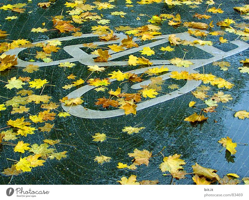 Blue Yellow Street Autumn Lanes & trails Rain Bicycle Wet Signs and labeling Climate Sidewalk Signage Traffic infrastructure Footpath Risk
