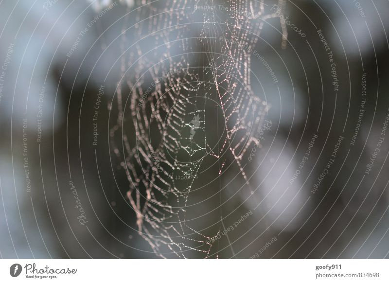 morning dew Nature Drops of water Summer Fog Garden Spider Contentment Network Exterior shot Close-up Morning Blur Shallow depth of field Central perspective