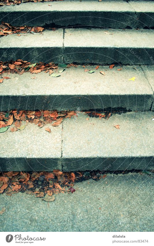 Autumn Stairs Stride
