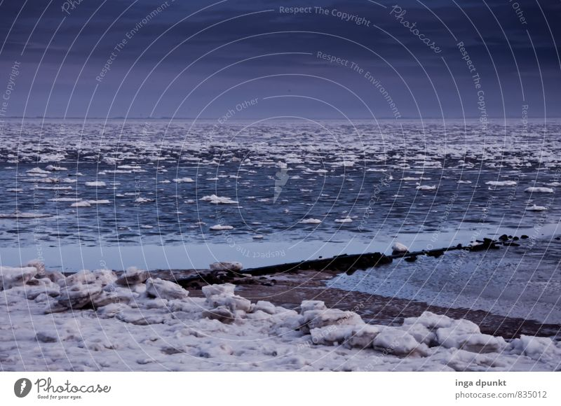 ice floes Environment Nature Landscape Elements Water Winter Climate Climate change Bad weather Ice Frost Snow Coast Ocean Island North Sea Fohr
