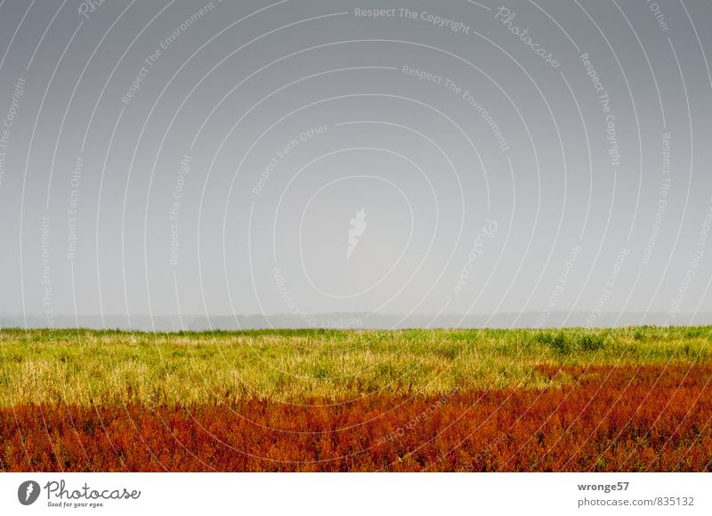 Bodden colours Nature Landscape Plant Sky Horizon Summer Bad weather Storm Thunder and lightning Grass Meadow Coast Boddenlandscape NP Threat Yellow Gray Red
