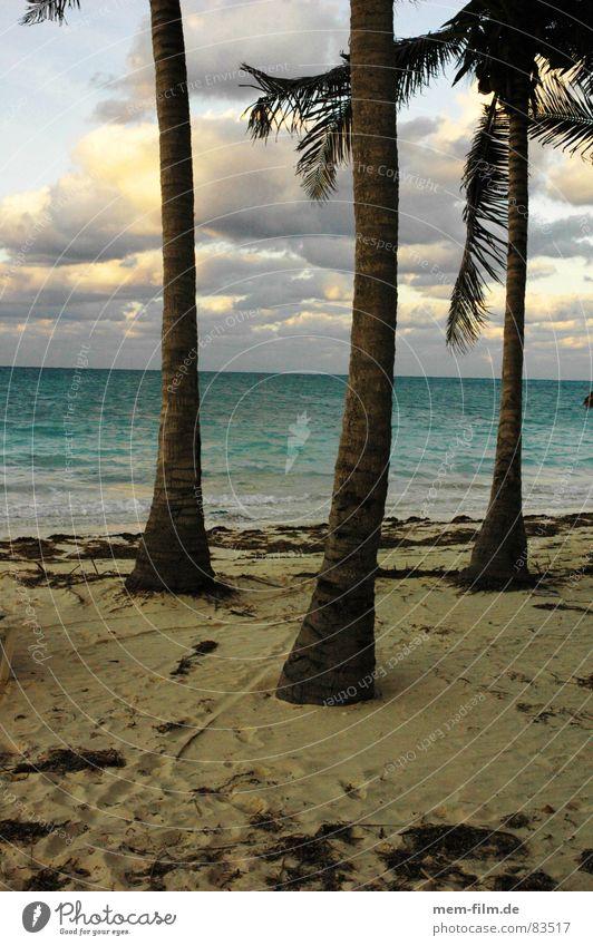 Ocean Beach Vacation & Travel Coast Island Leisure and hobbies Cuba Palm tree Sandy beach Coconut Bathing place Coconut palm