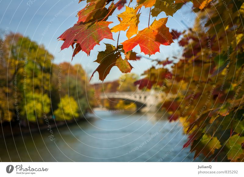 Autumn on the Isar Water Tree Brook River Deserted Bridge Warmth Yellow Orange Red Serene Calm Esthetic Autumnal Leaf Colour photo Multicoloured Exterior shot