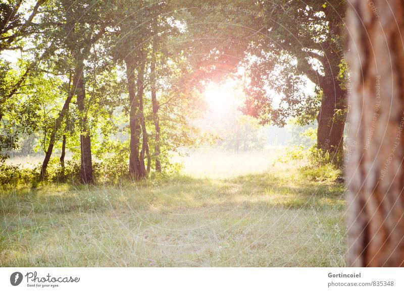 New day Environment Nature Landscape Sun Summer Beautiful weather Tree Bright Lens flare Morning Back-light Meadow Colour photo Multicoloured Exterior shot