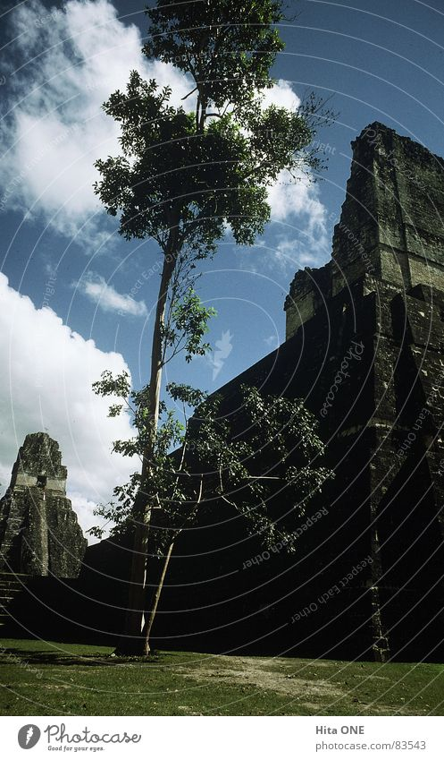 high up Temple Culture Maya Step Pyramid Advanced Sacrosanct Dignified South America Tree Worm's-eye view Meadow Grass Holy Ruin Ancient Mystic Calm Building