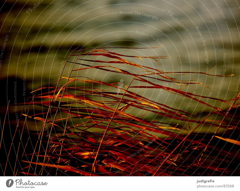 Nature Beach Yellow Autumn Grass Lake Sand Line Orange Coast Wind Environment Gold Point Stalk Blade of grass