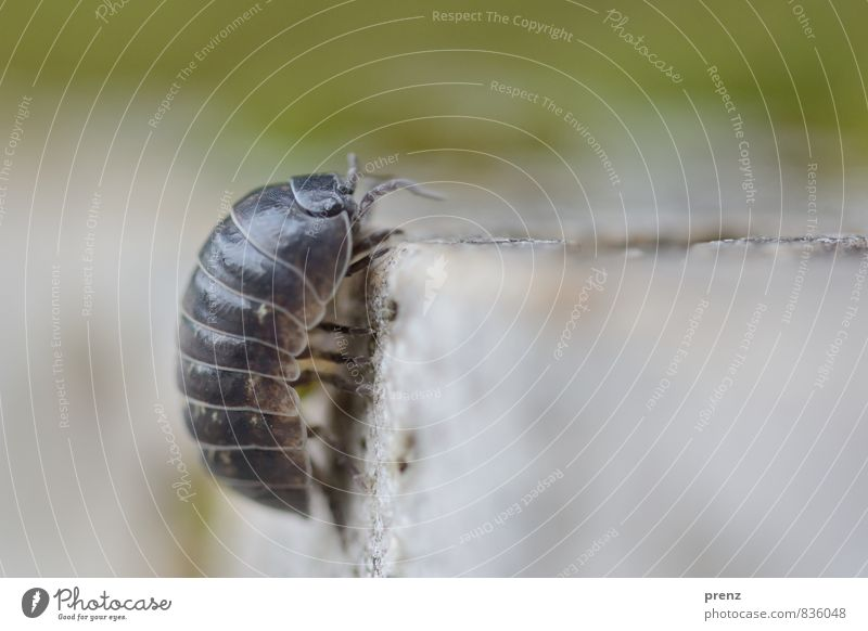 Nature Green Summer Animal Environment Gray Stone Beautiful weather Climbing Isopod Pill bug