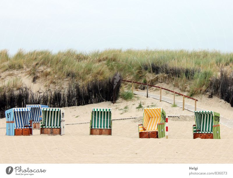 put it in and chill... Vacation & Travel Tourism Summer Summer vacation Environment Nature Landscape Plant Sky Beautiful weather Grass Foliage plant Coast Beach