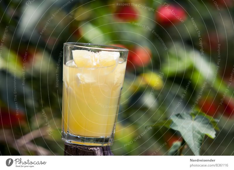 refreshment Food Fruit Organic produce Diet Beverage Cold drink Lemonade Glass Exotic Summer Garden Fragrance Fresh Healthy Sour Multicoloured Yellow To enjoy
