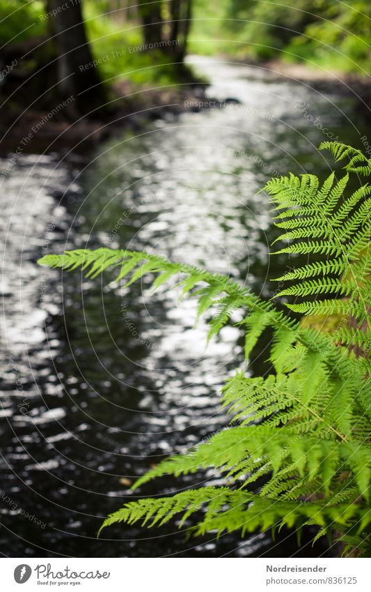 fern Calm Hiking Nature Landscape Plant Water Spring Summer Fern River bank Growth Fluid Green Thuringia Thueringer Wald Colour photo Exterior shot Deserted