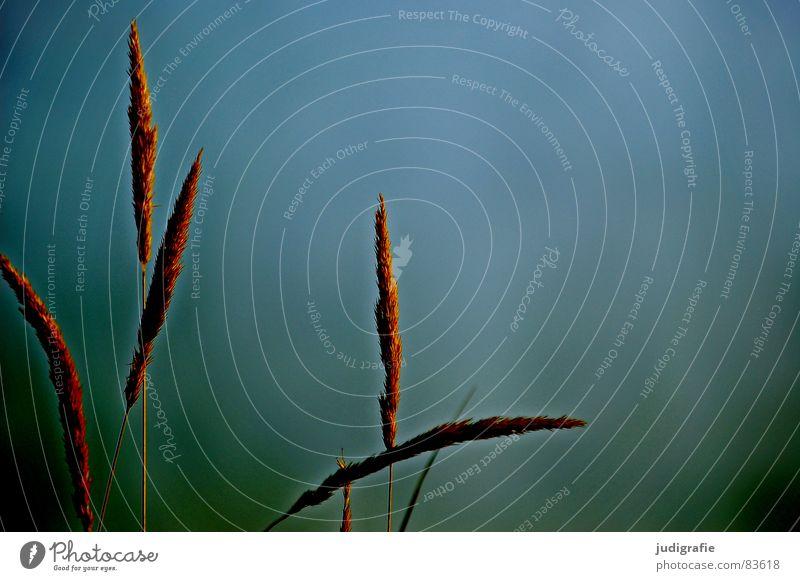 Nature Beach Yellow Grass Lake Sand Line Orange Coast Wind Environment Gold Transience Point Stalk Blade of grass