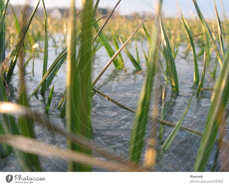 grass ice Grass Green Village Winter Frozen Ice Water