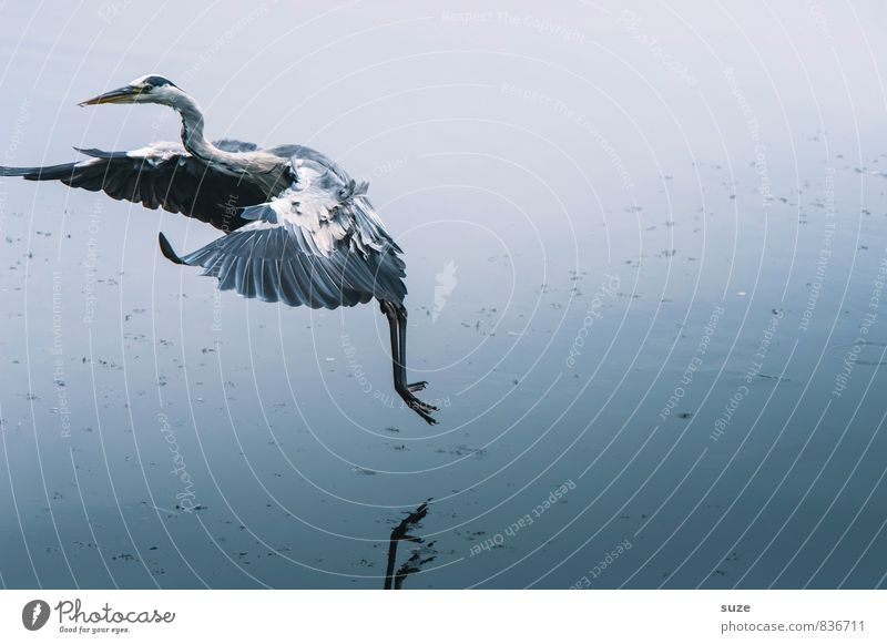 Nature Blue Water Landscape Animal Cold Environment Natural Lake Flying Bird Elegant Wild Wild animal Free Authentic