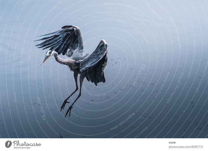 Nature Blue Beautiful Water Landscape Animal Cold Environment Life Natural Lake Flying Bird Elegant Wild Wild animal