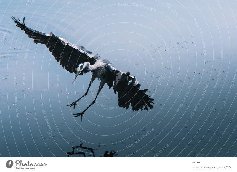Nature Blue Beautiful Water Landscape Animal Cold Environment Natural Lake Flying Bird Elegant Wild Wild animal Authentic