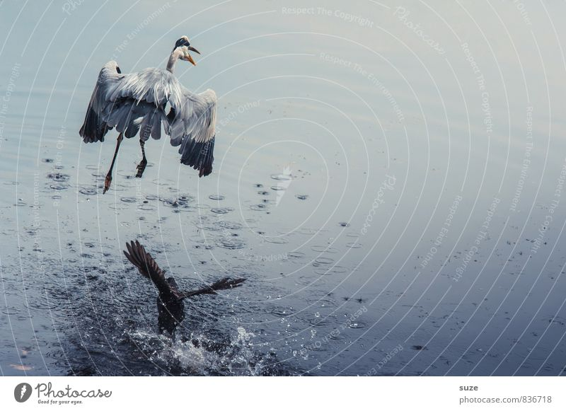 Nature Blue Water Landscape Animal Environment Natural Lake Flying Bird Elegant Wild Wild animal Authentic Feather Wing