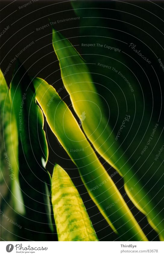 Green Plant Life Relaxation Small Fresh Trust Long Easy Diagonal Harmonious Comforting Part of the plant