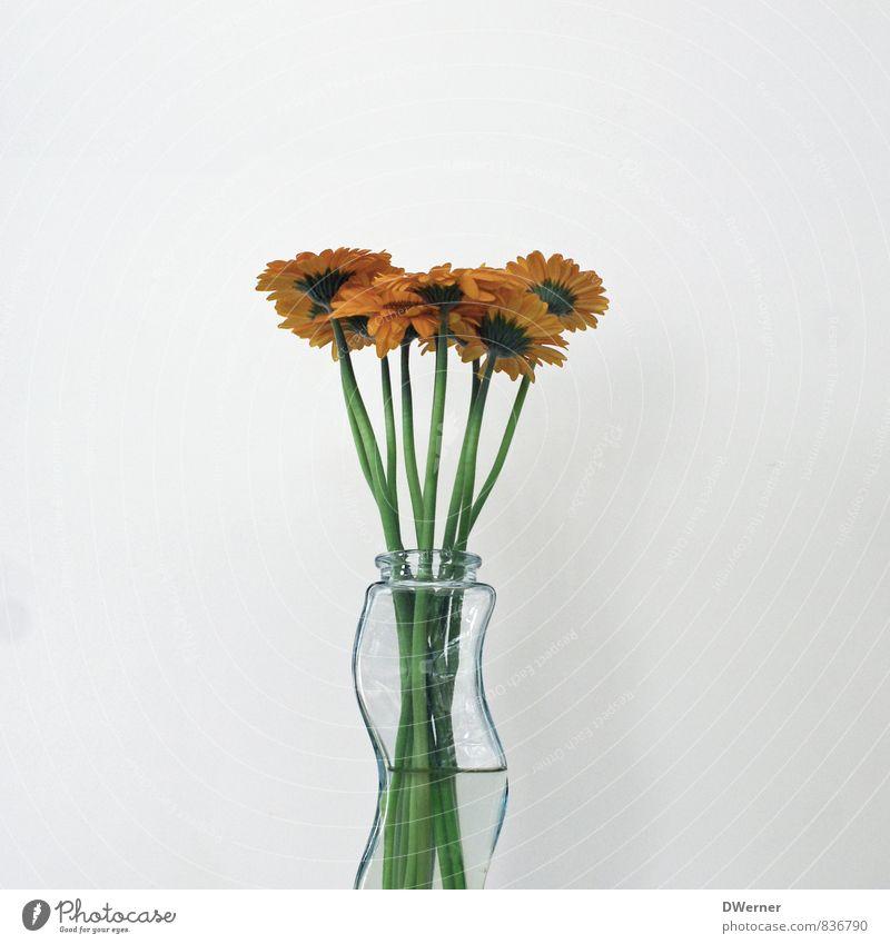 gerbera Senses Relaxation Fragrance Arrange Interior design Decoration Nature Plant Flower Beautiful Green Orange Joy Love Loyalty Elegant Idyll Vase Gerbera