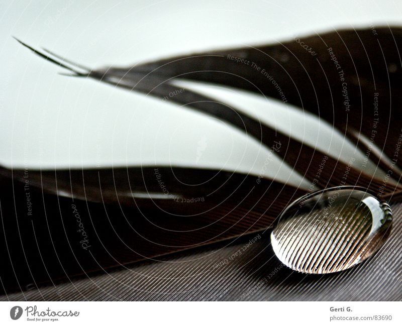 Water Brown Line Feather Drops of water Round Transparent Fat Delicate Magnifying glass Stick Marble Hydrophobic Surface tension Magnifying effect Love pearl