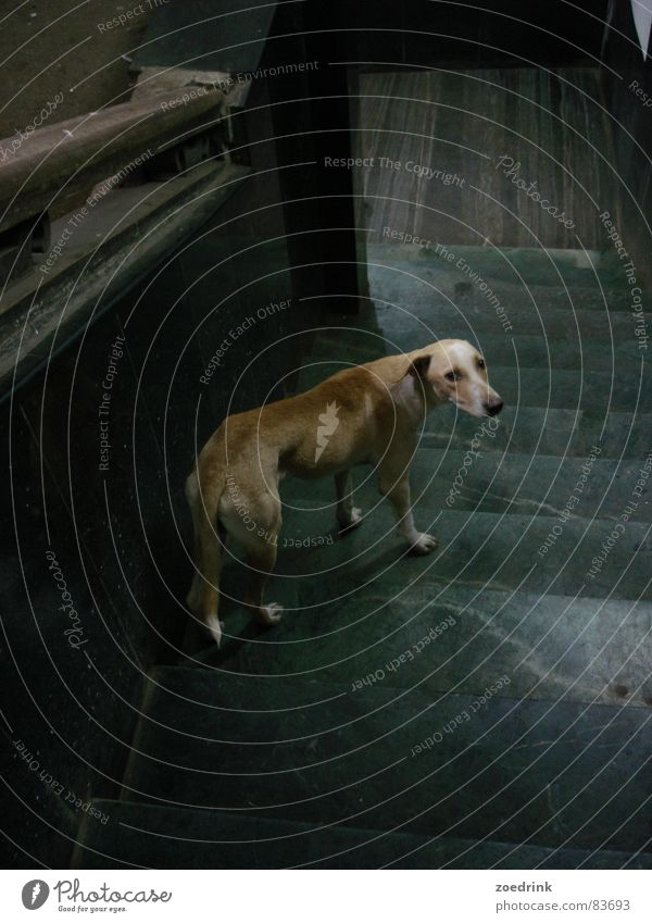breakup Grief Distress Mammal Moral dog sad loneliness downstairs steps waiting hope leave Goodbye