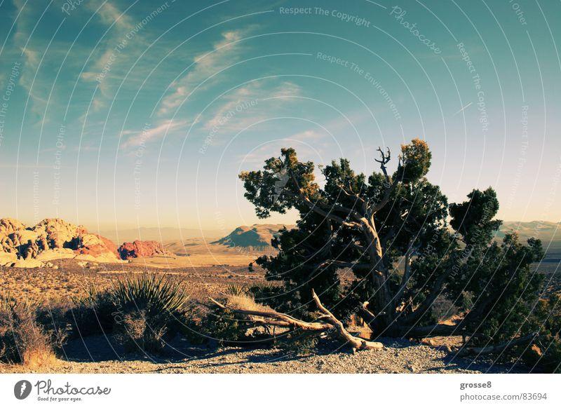 Tree Sun Winter Mountain Desert Blue sky Canada Nevada Las Vegas Red rock canyon