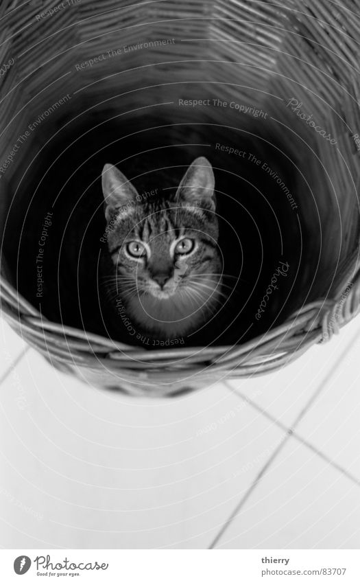 there you are Basketball basket Mammal cat Black & white photo rye found hiding contrast fun eyes animal pet