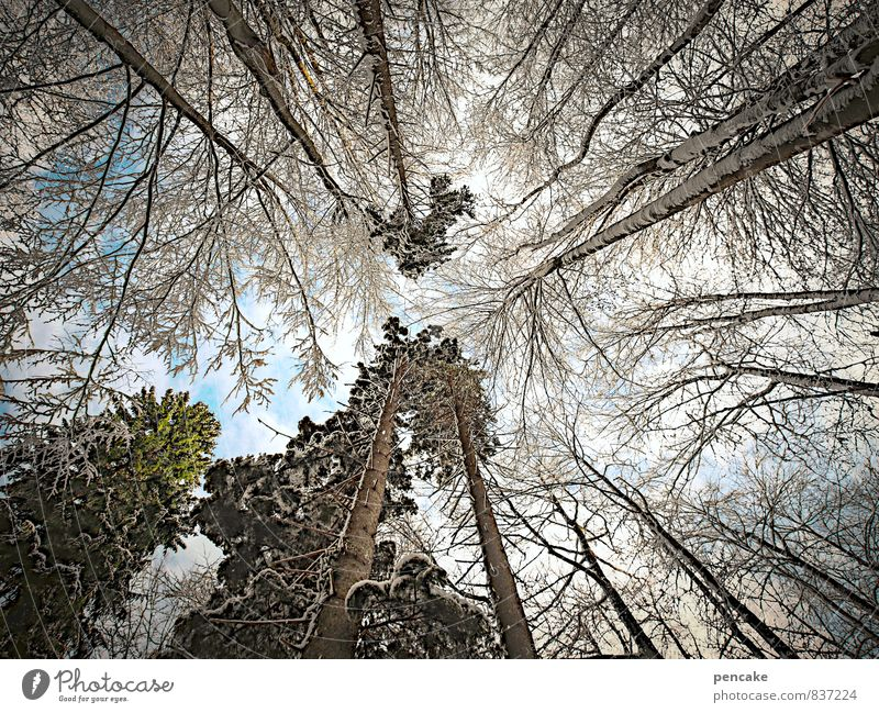 Bizarre eye travel. Elements Sky Clouds Winter Ice Frost Snow Tree Forest Sign Looking Inspiration Vacation & Travel Change Worm's-eye view Treetop Upward