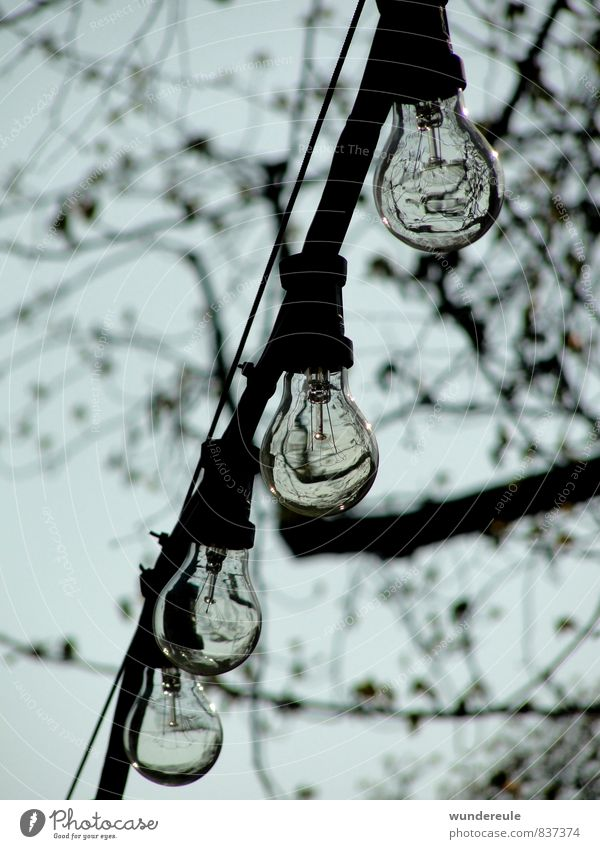 light sources Lamp Nature Air Tree Hang Cable Reflection Lighting Electricity Colour photo Black & white photo Exterior shot Deserted Day Shadow Contrast