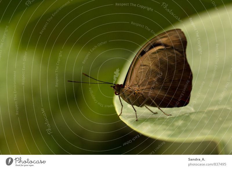 Nature Beautiful Green Summer Calm Leaf Animal Garden Moody Brown Flying Jump Park Elegant Contentment Beginning
