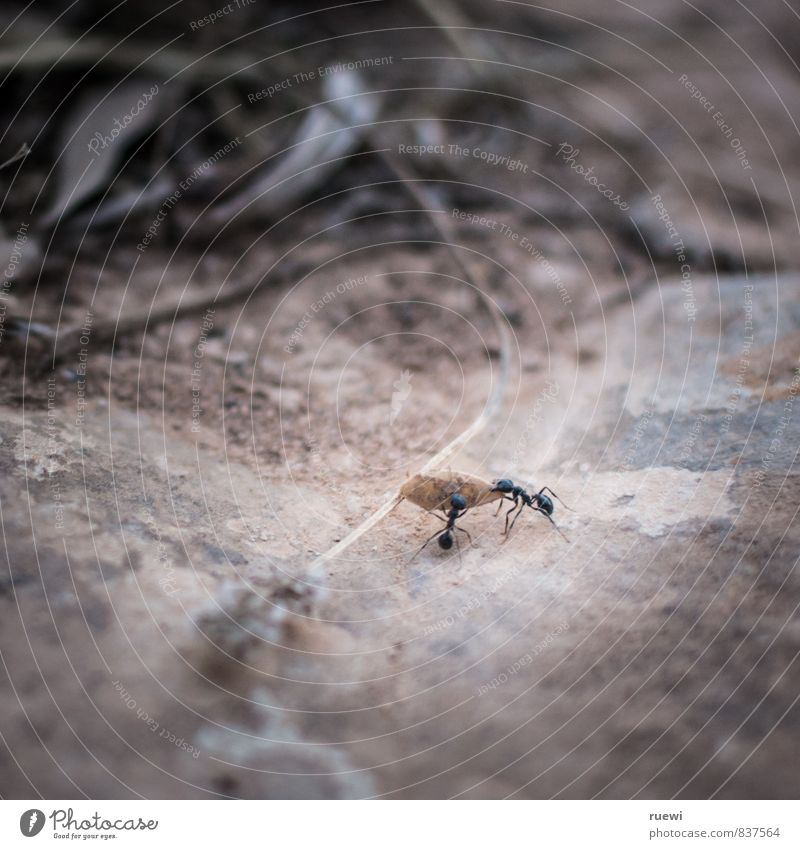Yeah, yeah, now they're spitting in their hands again. Seed Work and employment Logistics Team Environment Nature Animal Column of ants Ant 2 Group of animals