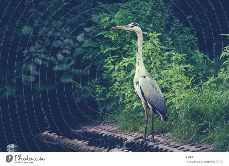 The Executor Elegant Nature Landscape Animal Meadow Lakeside Pond Wild animal Bird Wing 1 Stand Wait Esthetic Fantastic Natural Curiosity Green Pride Conceited