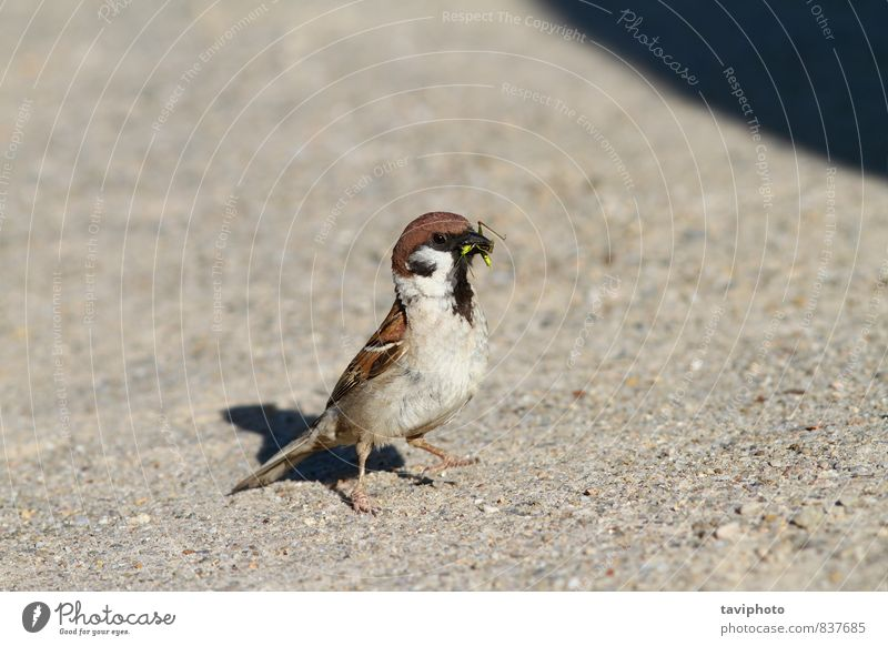 sparrow eating grasshopper Nature Green Beautiful Summer Animal Life Natural Eating Small Bird Park Wild Feather Sit Observe Ground