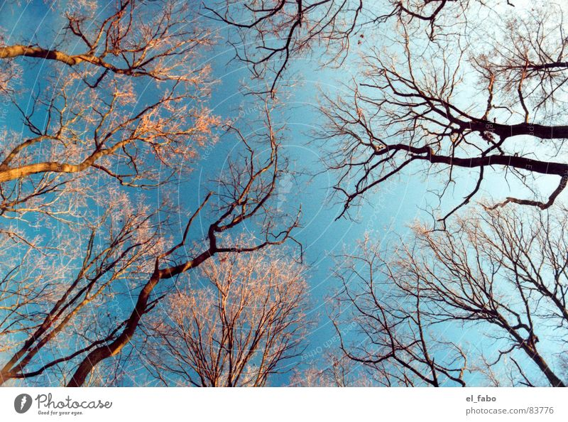 meeting Sunday Forest Tree Cold Autumn Winter walk through siegburg brückberg Sky Branch etc etc