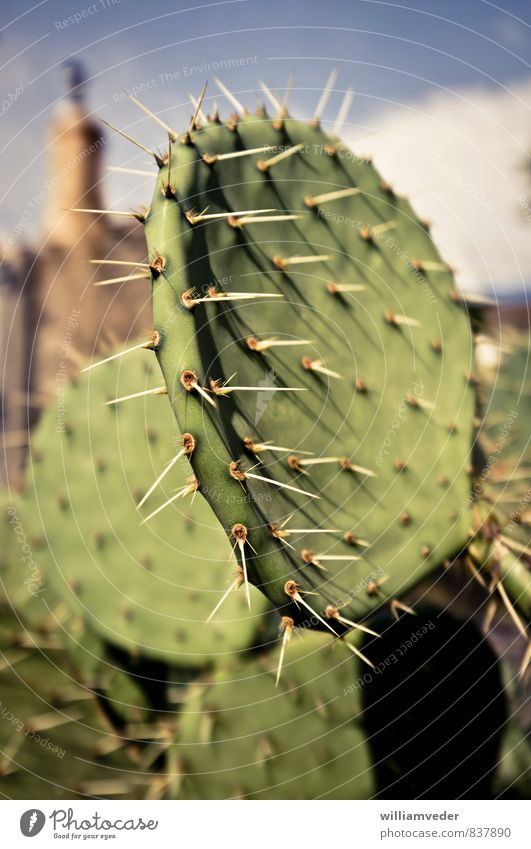 Flat cactus with long thorns Senses Acupuncture Vacation & Travel Tourism Far-off places Summer Summer vacation Sun Sunbathing Nature Beautiful weather Warmth