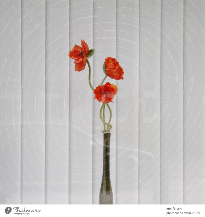 City Plant White Flower House (Residential Structure) Window Wall (building) Blossom Wall (barrier) Gray Orange Decoration Glass Esthetic Blossoming Kitsch