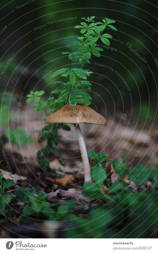 SECOND Environment Nature Plant Grass Bushes Leaf Foliage plant Wild plant Mushroom Forest Woodground Discover Looking Thin Authentic Fresh Uniqueness Long