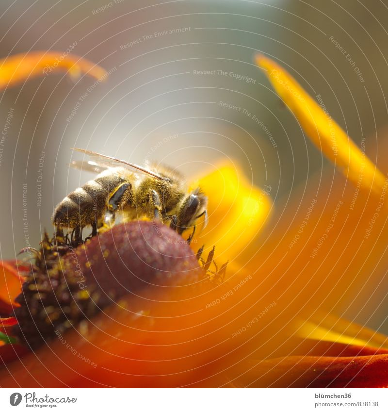 Beautiful Healthy Eating Animal Blossom Movement Natural Feminine Small Work and employment Wild animal Speed Blossoming Joie de vivre (Vitality) Insect