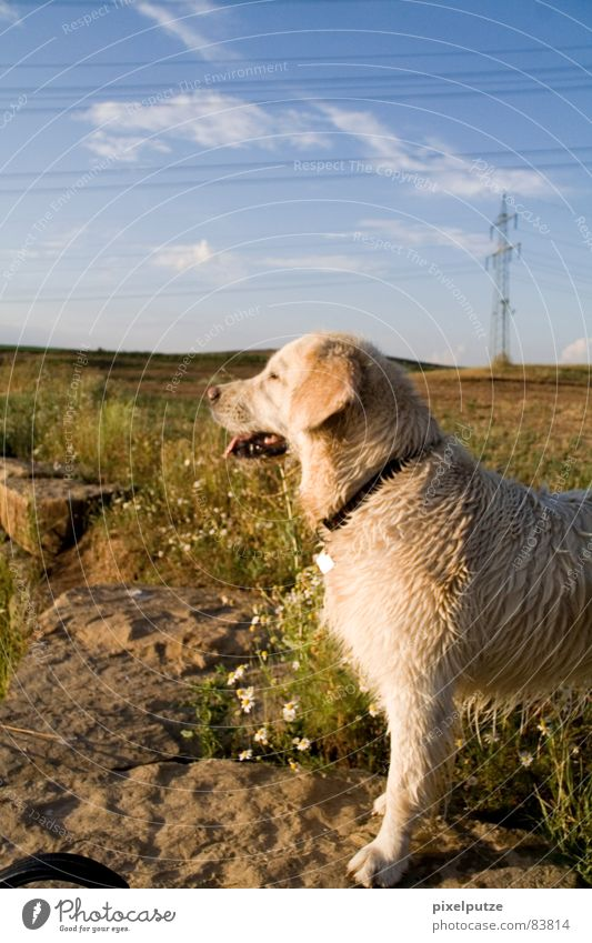 Flower Summer Vacation & Travel Animal Relaxation Meadow Dog Warmth Landscape Wait Wet Horizon Stand To go for a walk Physics Pelt