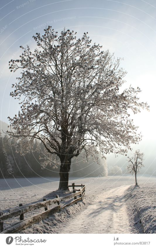 winter tyre Ash-tree Hoar frost Cold Tree Lanes & trails Frost Alley Seasons Winter White Ice Twig Snow Calm