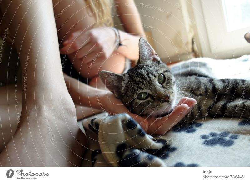 kittens Lifestyle Joy Leisure and hobbies Playing Living or residing Girl Young woman Youth (Young adults) Body Hand 1 Human being Animal Pet Cat Animal face