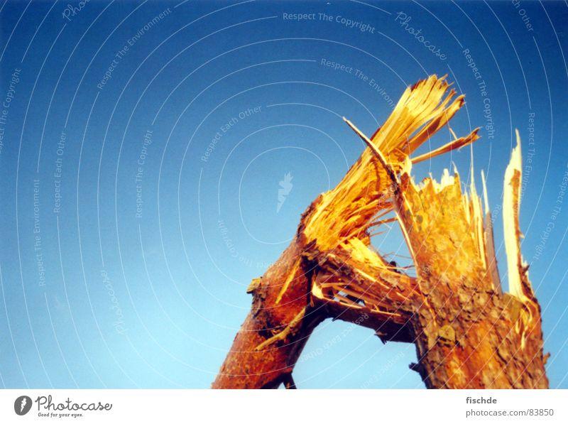 Sky Tree Wood Think Brown Wind Broken Storm Gale Tree trunk Broken Destruction Blue sky Tree bark Feeble Pine