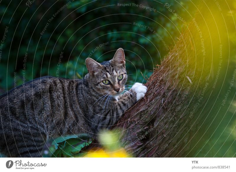 Cat Calm Animal Dark Cold Exceptional Elegant Observe Adventure Tree trunk Athletic Climbing Discover Animal face Catch Hunting